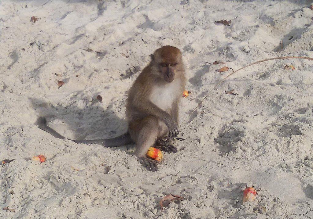 Monkey on the Beach