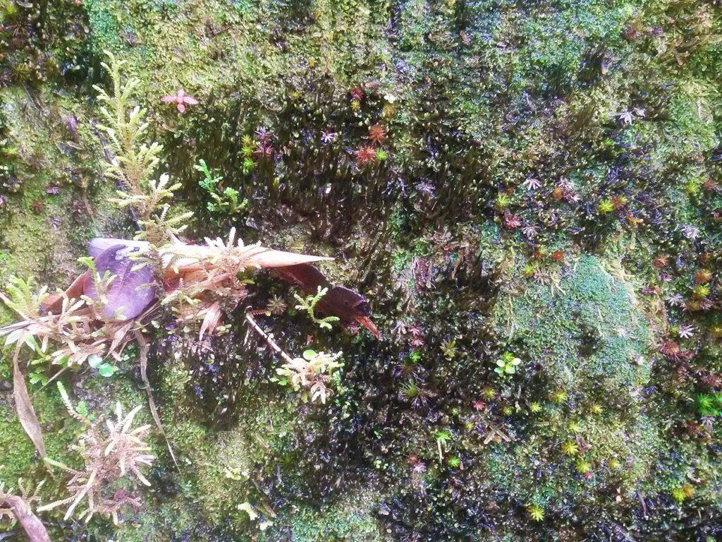 Beautiful Moss