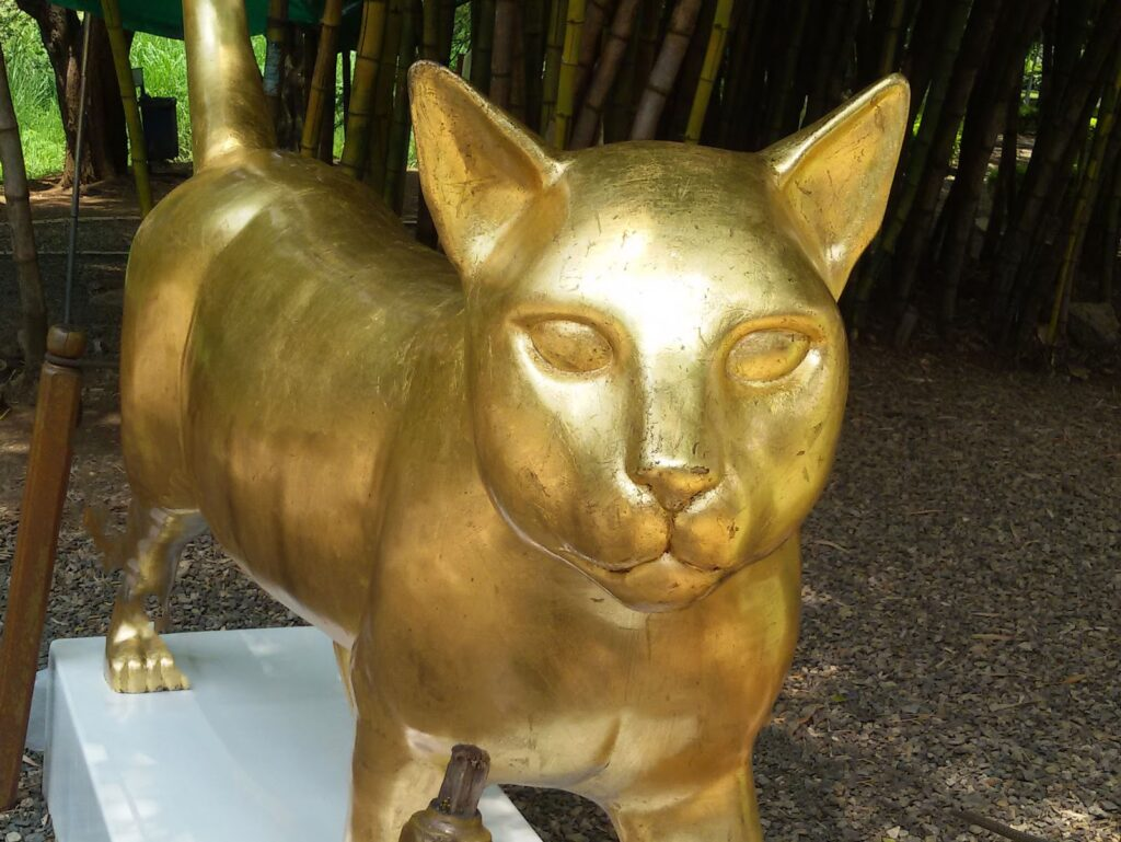 Golden Cat in Cali, Colombia