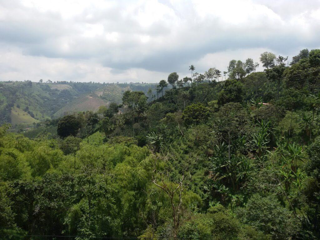 Salento Colombia's Coffee Region