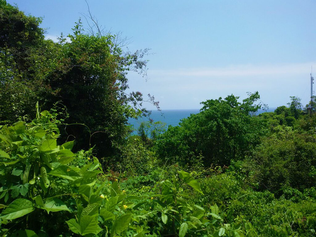 Vegetation at the Parque Tayrona