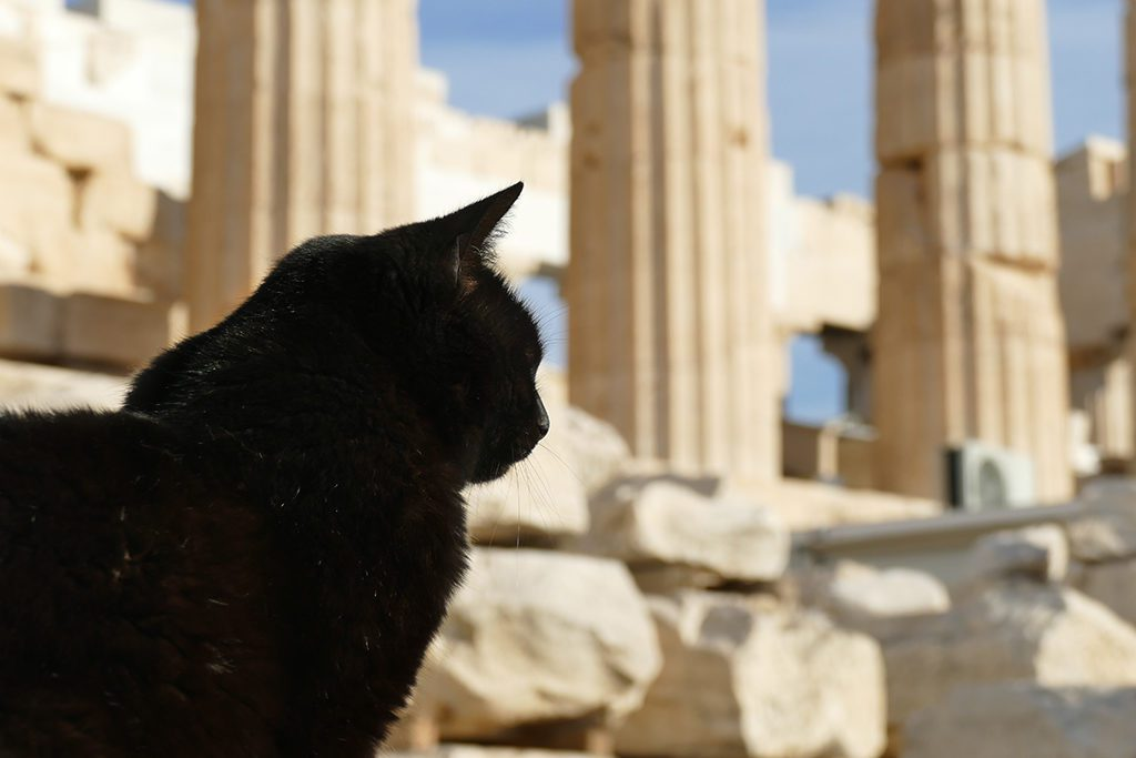 Cat at the Acropolis in Athens, Greece