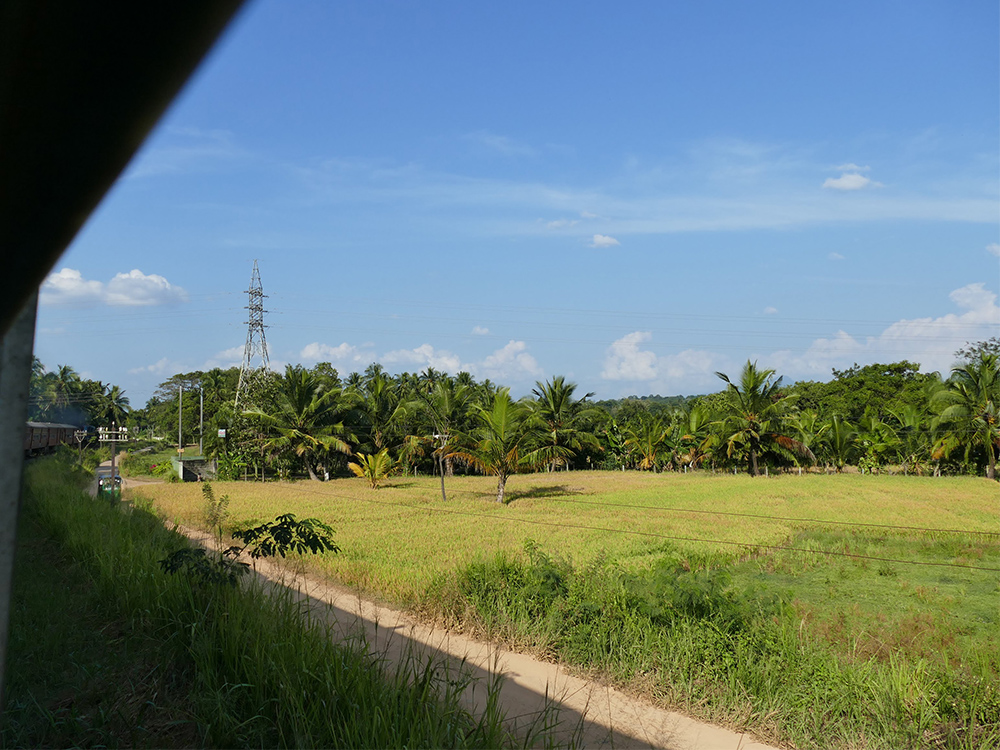 bye:myself - Renata Green - byemyselftravels: Train to Anuradhapura Sri Lanka
