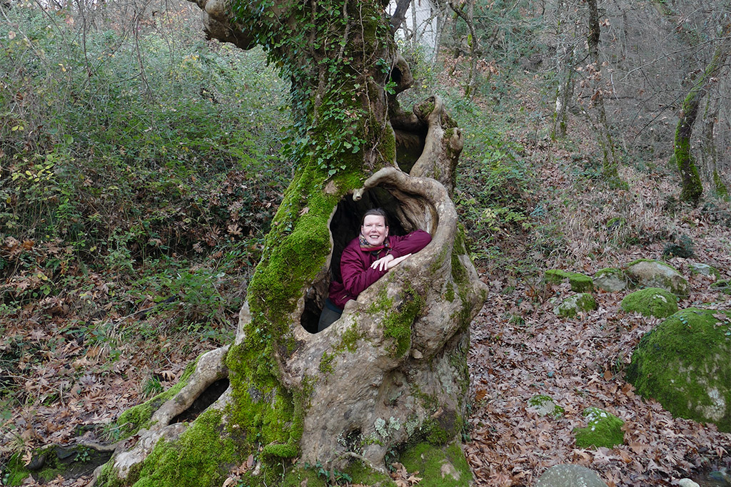 Renata Green in a tree trunk