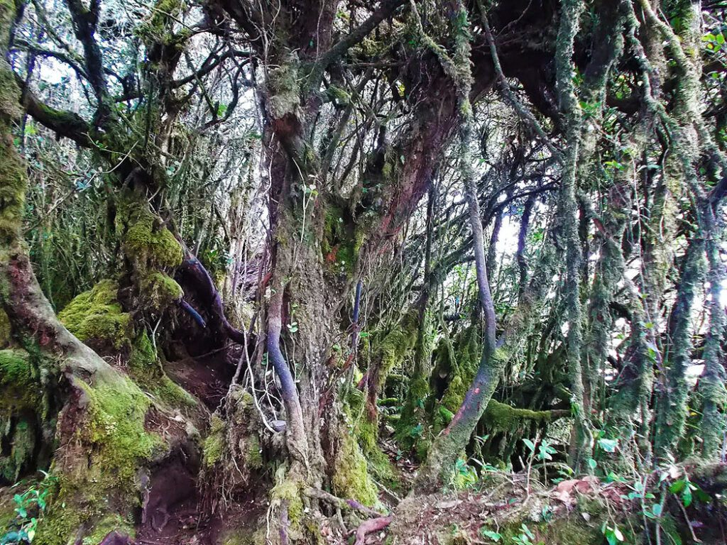 The Mossy Forest