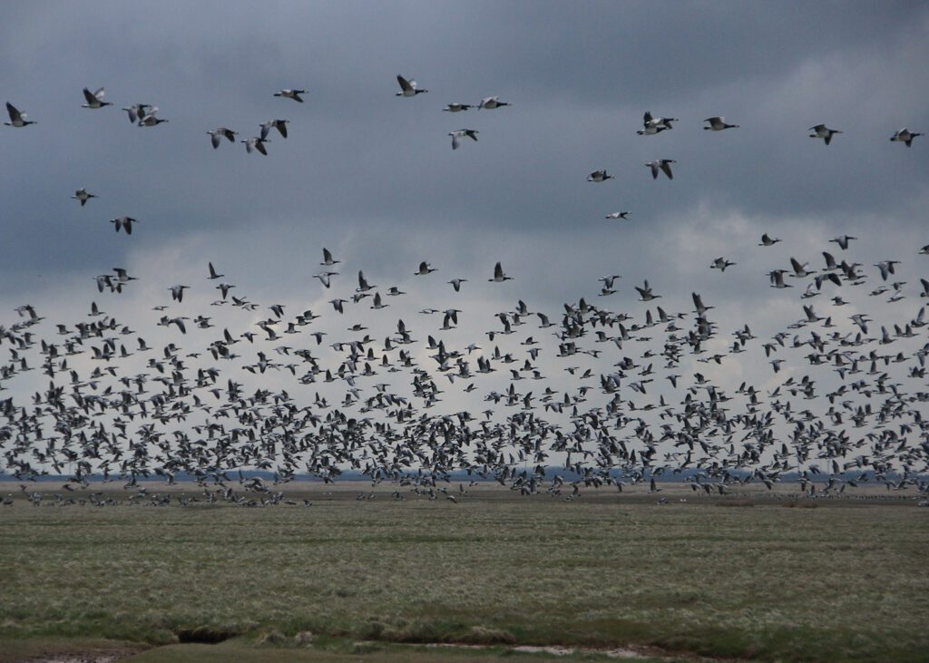 A large flock of birds