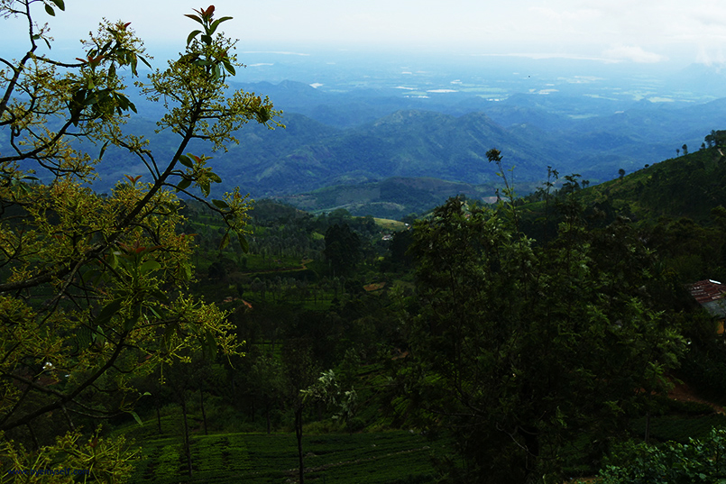 Hills covered with cloud forests and tea plantations on the Highlands of Nuwara Eliya and Haputale