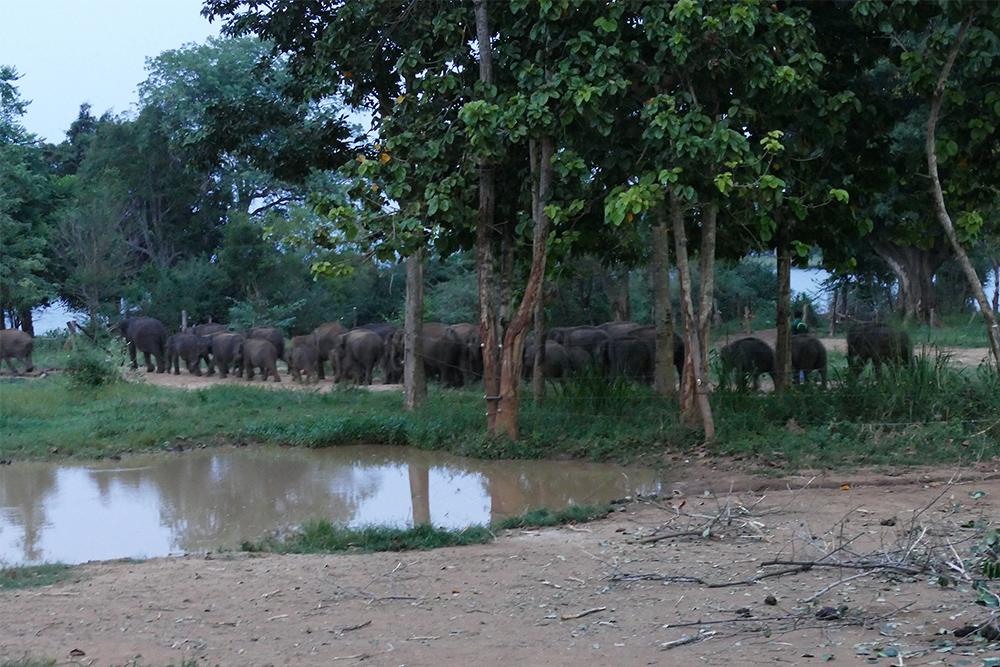 Elephant orphanage in Uduwalawe