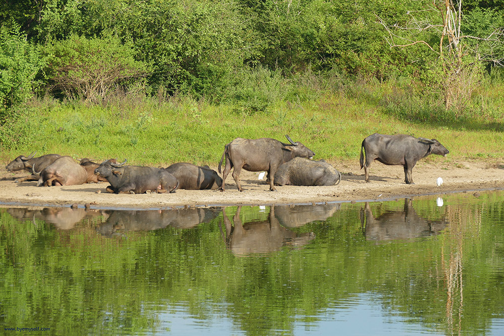 bye:myself - Renata Green - byemyselftravels: Udawalawe Safari