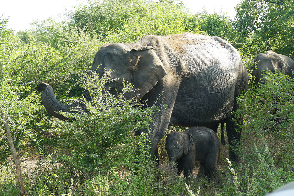 Elephant mothers and babies