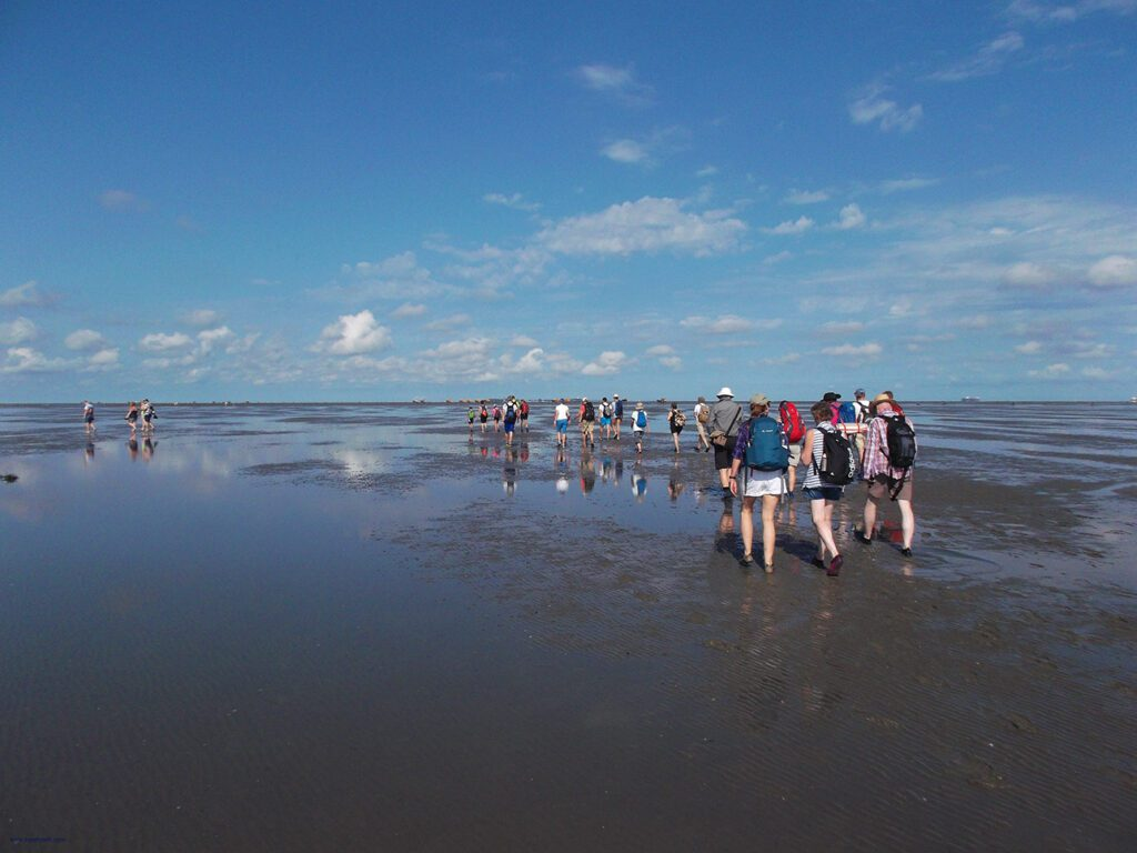 A group of people walking on water from Cuxhaven to Neuwerk