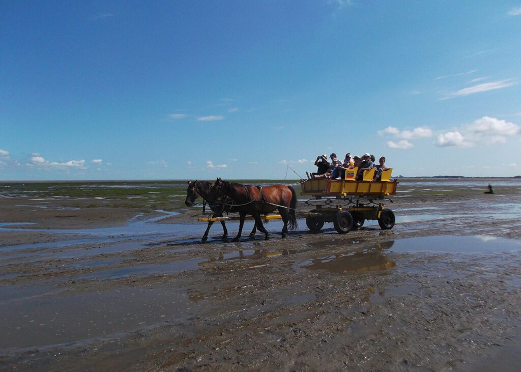 Carriage on the Lower Saxon Wadden Sea