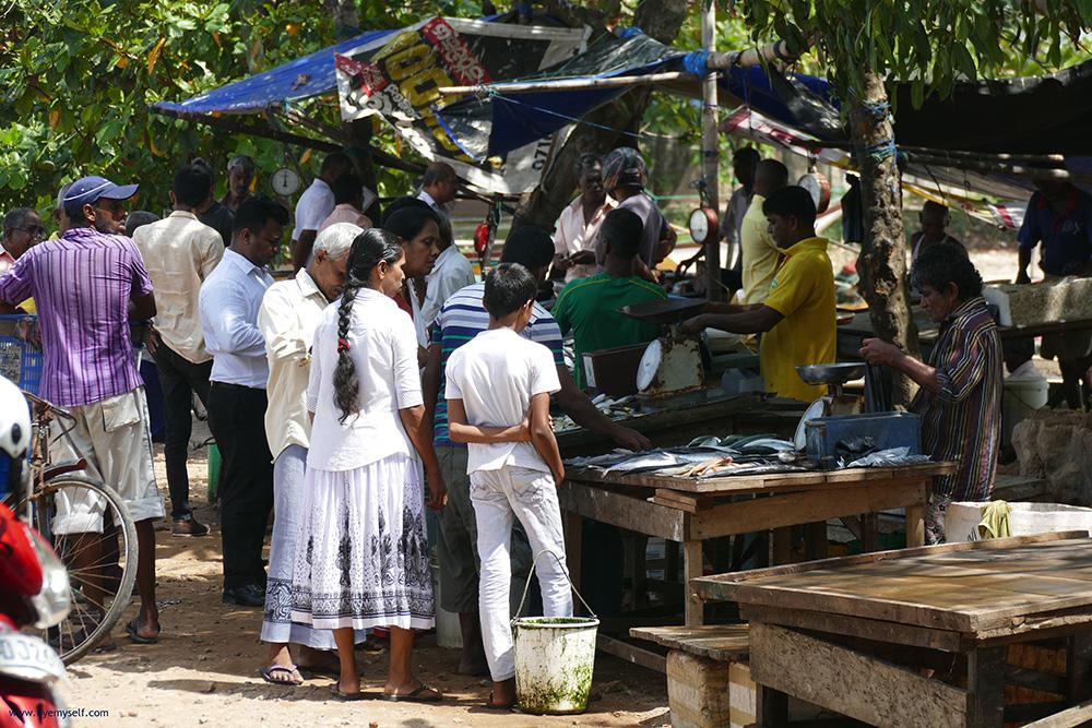 Fishmarket in Galle Sri Lanka