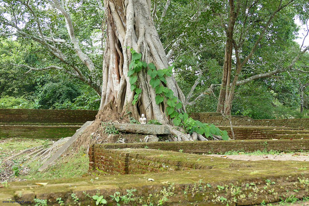 bye:myself - Renata Green - byemyselftravels: Polonnaruwa Sri Lanka