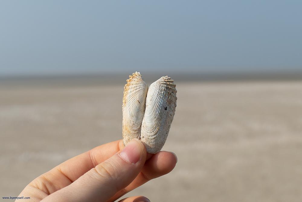 Shells on Sandbar