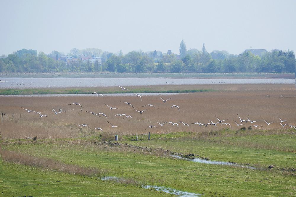 Waterbird reserve Wallnau on Fehmarn